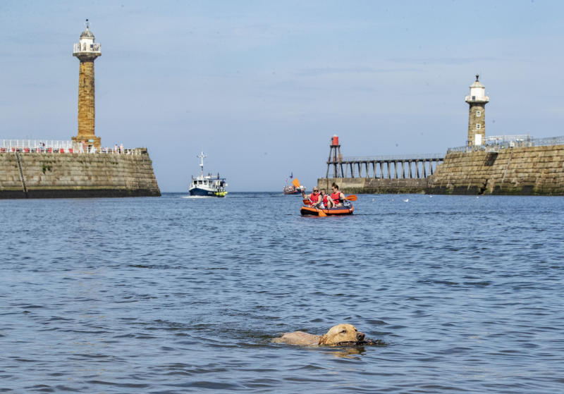 A dog swims in the harbour at Whitby in Yorkshire, as a bank holiday heatwave will see most of the country sizzling in sunshine with possible record temperatures, the Met Office has said.