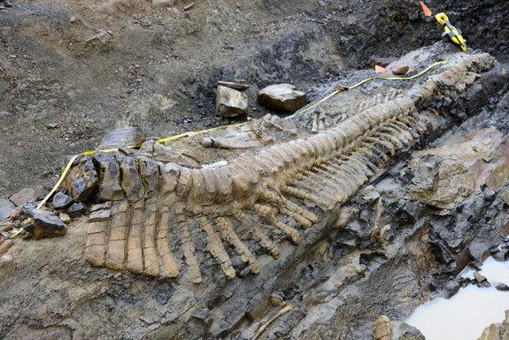Huge Dinosaur Tail Discovered in Mexico