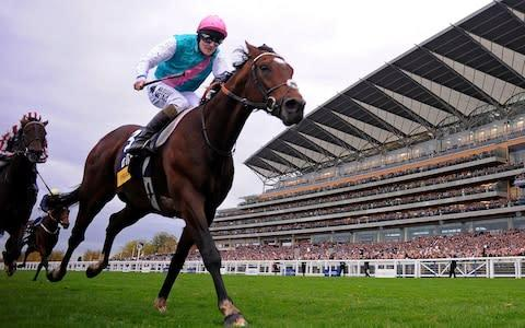 <span>Frankel won his 14th and final race at the Champion Stakes at Ascot in 2012</span> <span>Credit: Getty Images </span>