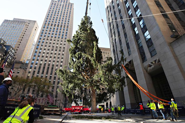 The Rockefeller Center Christmas Tree arrives at Rockefeller Plaza and is craned into place on November 14, 2020 in New York City. / Credit: Getty Images