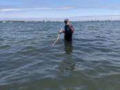 Michael Oppenheimer, one of the world's most prominent climatologists, rakes for clams