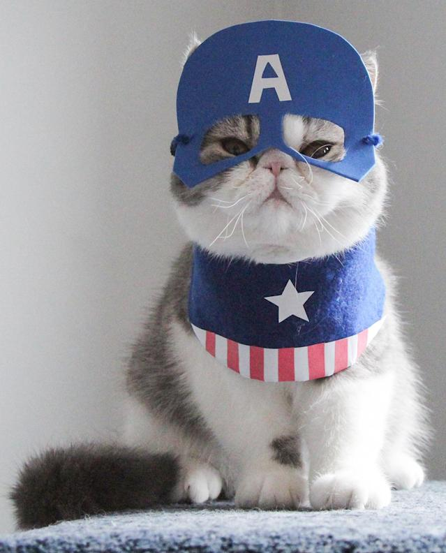 """<p>Snoopy wears a Captain America outfit. """"It really reflects how they are when they aren't wearing their costumes, they stick together and chase random objects with each other."""" (Photo: DailySnoopy/Caters News) </p>"""
