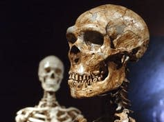A reconstructed skull in the foreground and the head and shoulders of a skeleton in the background