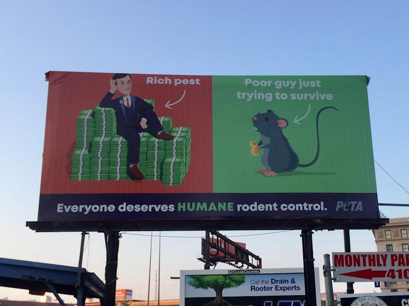 A billboard in Baltimore calls Jared Kushner a 'rich pest.' It was put up by PETA