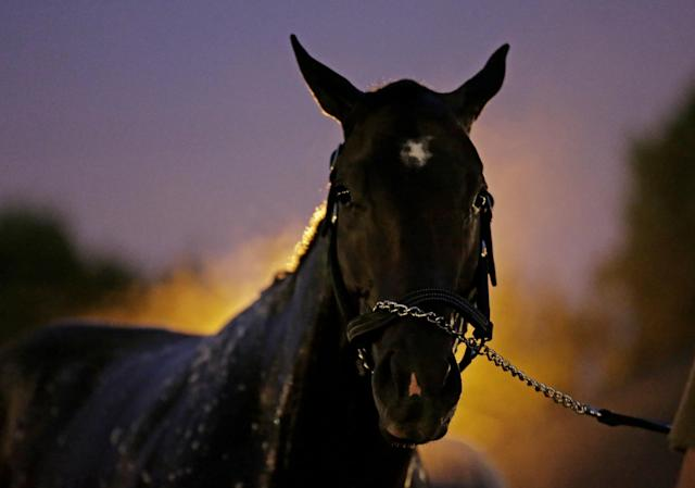 Kentucky Derby hopeful Vicar's in Trouble gets a bath after a morning workout at Churchill Downs Tuesday, April 29, 2014, in Louisville, Ky. (AP Photo/Charlie Riedel)