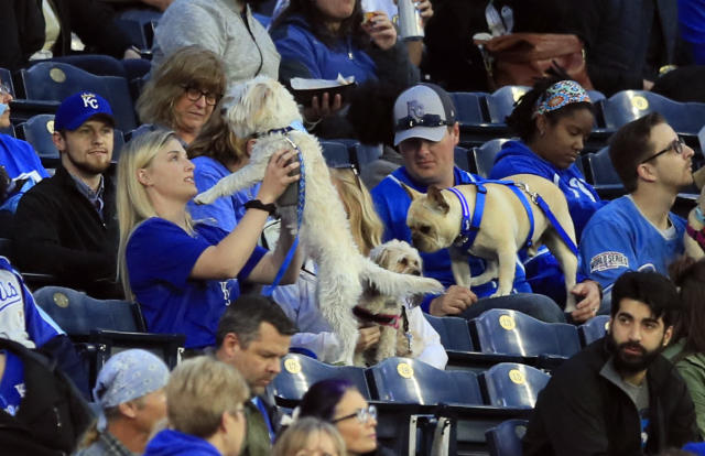 """Fans hold their dogs during the third inning of a baseball game between the Kansas City Royals and the Tampa Bay Rays at Kauffman Stadium in Kansas City, Mo., Monday, April 29, 2019. It was """"Bark at the Park"""" night at the stadium and fans could bring their dogs to the game. (AP Photo/Orlin Wagner)"""
