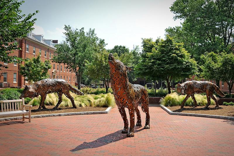 Wolf sculptures occupy a plaza on a college.