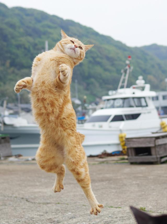 <p><span>Hisakata too one initial, intriguing photograph of one street cat in a kung fu pose. </span>(Photo: Hisakata Hiroyuki/Caters News) </p>
