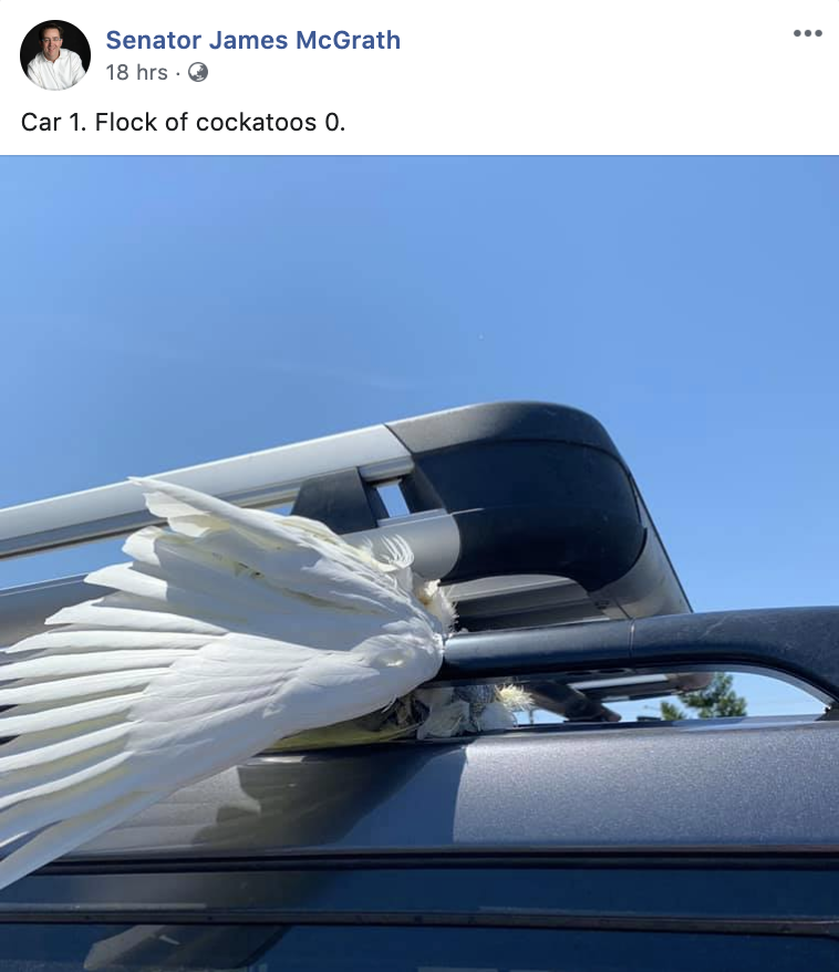 A screenshot of a dead cockatoo posted to the senator's Facebook page