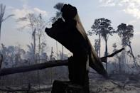 A burning tract of the Amazon forest as it is cleared by farmers, in Rio Pardo