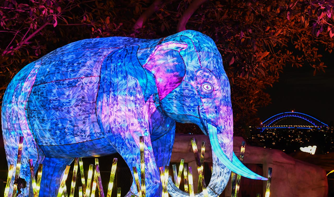 An Asian elephant lantern sculpture is illuminated with the Harbour Bridge lit blue in the background during the media preview of Vivid Sydney at Taronga Zoo on May 19, 2019 in Sydney, Australia. (Photo: James D. Morgan/Getty Images)