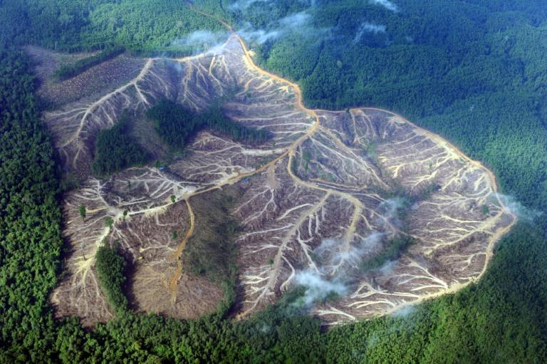 Protecting trees is key to meeting ambitious climate goals, with tropical rainforest loss accounting for about eight percent of annual carbon dioxide emissions, according to monitoring platform Global Forest Watch (AFP/Romeo GACAD)