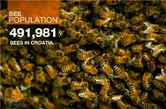 Climate change affects bee population