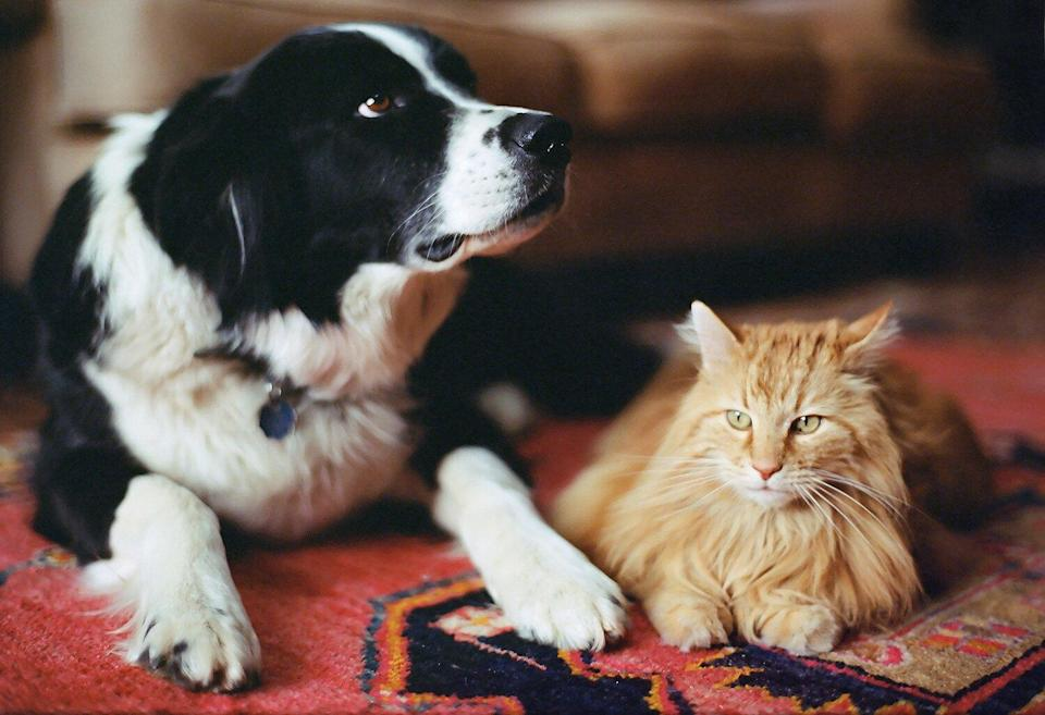 New Hampshire Lawmakers Can't Have Pets in Virtual Meetings