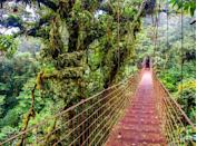 <p>Haven't you always wanted to walk on the canopy of the rain forest? Well, in this Costa Rican mountain town, suspension bridges span thick cloud forests, coffee plantations and volcano peaks.</p>