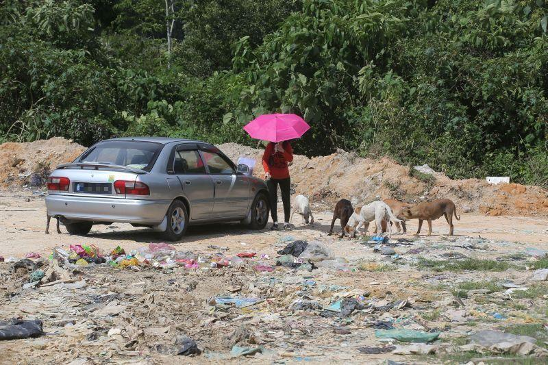 New shelter for stray dogs near Ipoh
