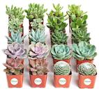 "<p><strong>Shop Succulents</strong></p><p>amazon.com</p><p><strong>$39.99</strong></p><p><a href=""https://www.amazon.com/dp/B01LXPI743?tag=syn-yahoo-20&ascsubtag=%5Bartid%7C10050.g.2973%5Bsrc%7Cyahoo-us"" rel=""nofollow noopener"" target=""_blank"" data-ylk=""slk:Shop Now"" class=""link rapid-noclick-resp"">Shop Now</a></p><p>Who doesn't want another succulent in their home? With this set, you'll have enough for each and every one of your girlfriends—and then some.</p>"
