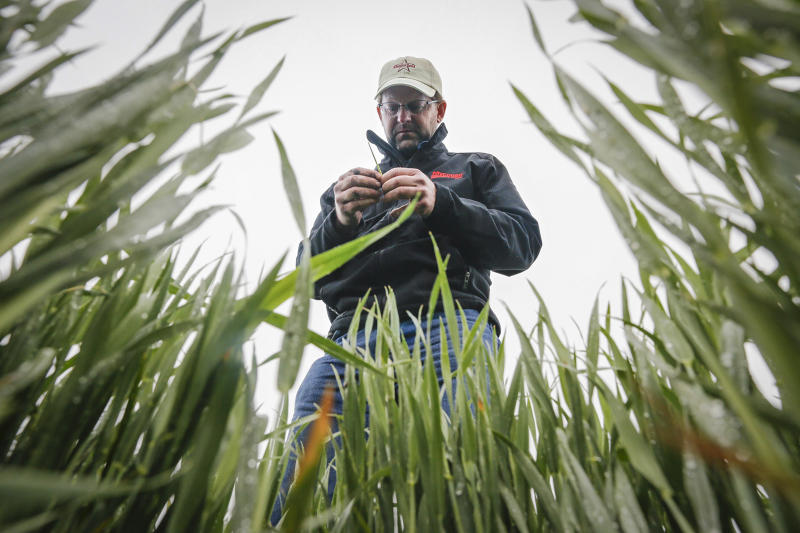 Report: US winter wheat production forecast down
