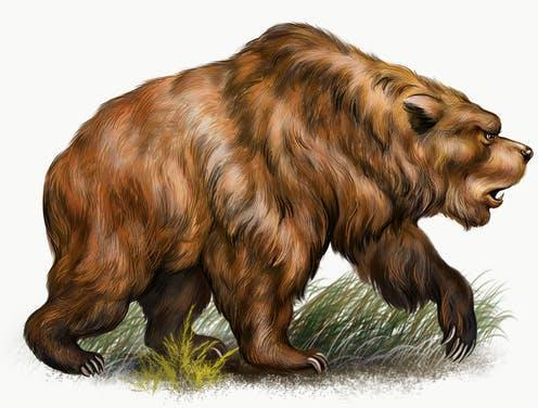 """<span class=""""caption"""">Cave bears are now extinct.</span> <span class=""""attribution""""><a class=""""link rapid-noclick-resp"""" href=""""https://www.shutterstock.com/image-illustration/cave-bear-ursus-spelaeus-realistic-drawing-1907166910"""" rel=""""nofollow noopener"""" target=""""_blank"""" data-ylk=""""slk:Shutterstock/Liliya Butenko"""">Shutterstock/Liliya Butenko</a></span>"""