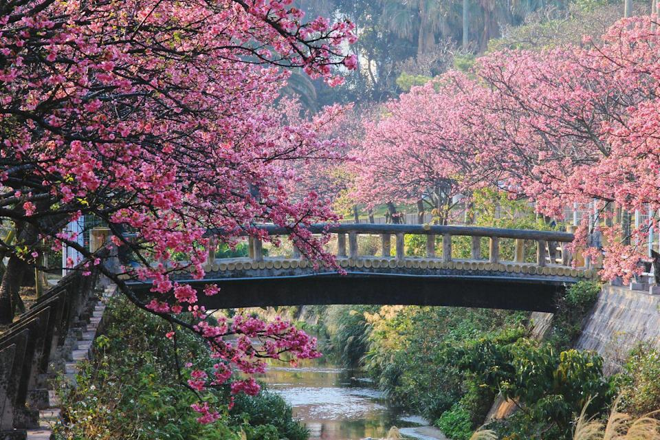 """<p>From the glittering neon metropolis of Tokyo, to the elegant gardens of Kyoto and ancient castles of Osaka, Japan is a country of incredible contrasts and fascinating history. </p><p>Famous around the world for its delicate cuisine and colourful culture, there are few better times to visit this bewitching country than during the spring, when the pink cherry blossom trees dotted along streets, by rivers and through parks burst into pretty pink petals.</p><p>It's a <a href=""""https://www.goodhousekeeping.com/uk/lifestyle/travel/a28975916/best-time-visit-japan/"""" rel=""""nofollow noopener"""" target=""""_blank"""" data-ylk=""""slk:wonderful time to visit"""" class=""""link rapid-noclick-resp"""">wonderful time to visit</a> if you love nature, as the brief appearance of the cherry blossom, or Sakura, is celebrated throughout Japan with Hanami picnics and events. While there, you can combine cherry blossom viewing with excursions to hot springs, the Japanese Alps and iconic Mount Fuji, where a relaxing cruise on Lake Ashi is simply bliss.</p><p>Tour Japan in cherry blossom season with Good Housekeeping in March 2022. </p><p><a class=""""link rapid-noclick-resp"""" href=""""https://www.goodhousekeepingholidays.com/tours/japan-tokyo-cherry-blossom-kyoto-fuji-osaka-tour"""" rel=""""nofollow noopener"""" target=""""_blank"""" data-ylk=""""slk:FIND OUT MORE"""">FIND OUT MORE</a></p>"""