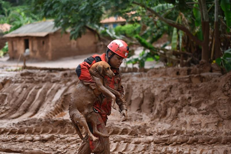 A fireman rescues a dog from toxic mud from a mine in Minas Gerais, Brazil on November 9, 2015 (AFP Photo/Douglas Magno)