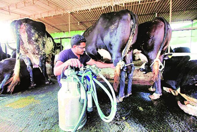 Milk is a source of liquidity, predictability and stability in rural incomes.