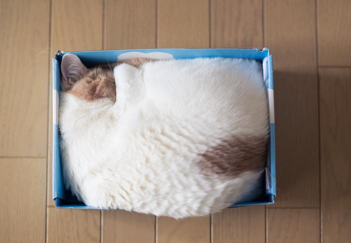 Beige and white cat sleeping snugly in tight blue box.