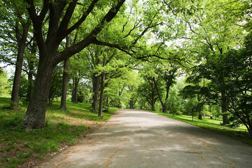 """<p><strong>Let's start big picture here.</strong> A gorgeous 281-acre green space within Boston, Arnold Arboretum of <a href=""""https://www.cntraveler.com/galleries/2016-01-29/the-20-most-beautiful-college-campuses-in-america?mbid=synd_yahoo_rss"""" rel=""""nofollow noopener"""" target=""""_blank"""" data-ylk=""""slk:Harvard University"""" class=""""link rapid-noclick-resp"""">Harvard University</a> is the oldest public arboretum in North America (c. 1872) and the highlight of Frederick Law Olmsted's famed <a href=""""https://www.emeraldnecklace.org/park-overview/frederick-law%E2%80%88olmsted/"""" rel=""""nofollow noopener"""" target=""""_blank"""" data-ylk=""""slk:Emerald Necklace"""" class=""""link rapid-noclick-resp"""">Emerald Necklace</a>. Prolific biking and walking trails zigzag past more than 16,000 accessioned plants, many meticulously marked with signs. The natural splendor is a feast for the eyes, which are able to spot the sheer diversity of trees and plants at every turn. QR-coded signs and the arboretum's easy-to-use """"Expeditions"""" app make it possible to dig deep into the environment.</p> <p><strong>Any standout features or must-sees?</strong> There's not a bad view to be had in the entire arboretum. But a good starting point is the quarter-mile long Explorers Garden Tour, which showcases dozens of exotic plants from Central China and Korea plus the much-photographed Franklin Tree, which once grew in Georgia but is now extinct in the wild.</p> <p><strong>Was it easy to get around?</strong> The arboretum is easy to navigate, but it's also easy to get lost (Don't worry, given the many well-marked intersections, you won't stay lost for long.) The best thing to do is to download the <a href=""""https://arboretum.harvard.edu/visit/explore-with-us/expeditions-the-arboretums-new-mobile-app/"""" rel=""""nofollow noopener"""" target=""""_blank"""" data-ylk=""""slk:""""Expeditions"""" app"""" class=""""link rapid-noclick-resp"""">""""Expeditions"""" app</a>, which has a map feature that will help guide you along trails and keep you on track during audio tours. """