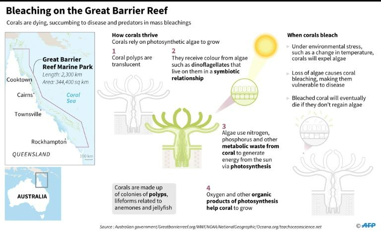 Graphic on bleaching on Australia's Great Barrier Reef