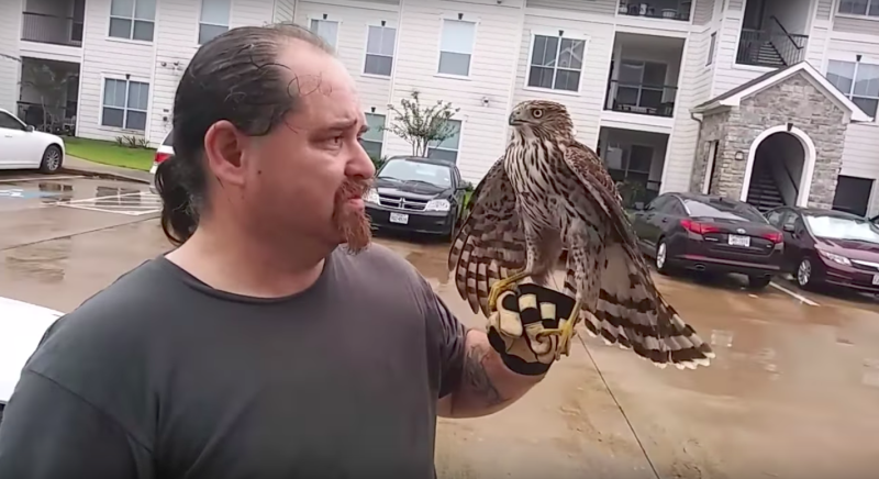 A hawk perches on William Bruso's gloved hand after refusing to fly away. (William Bruso/YouTube)