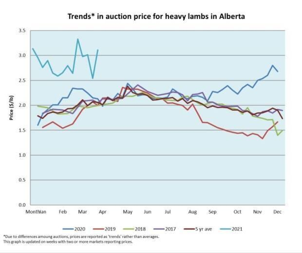 The turquoise line at the top of the graph represents this years price-per-pound for heavy lamb compared to previous years. The information is provided by Alberta Lamb Producers and is based on selling prices at Alberta auctions.