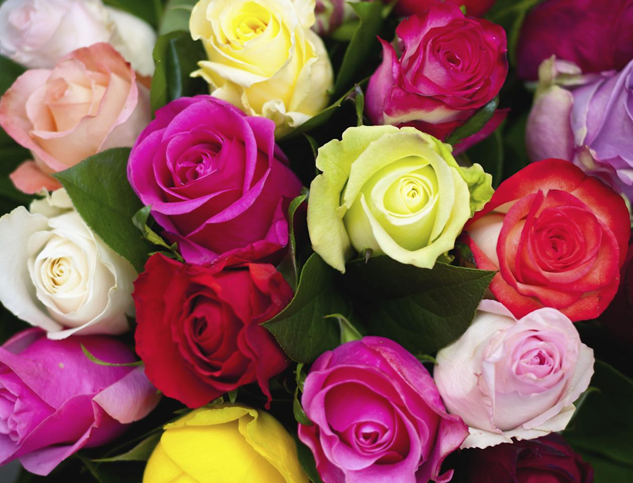 <p>Do you know the meanings of these coloured roses?</p>