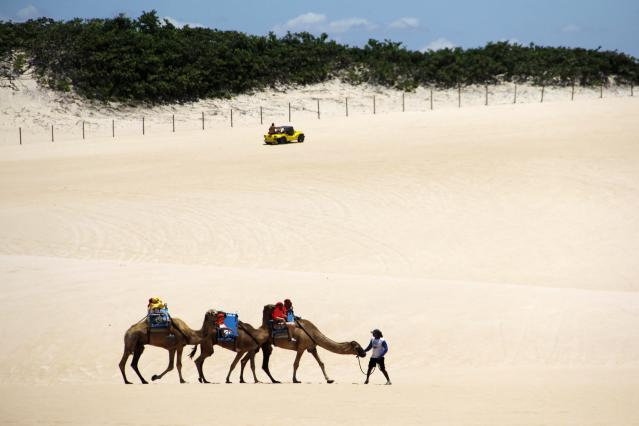 Tourists ride on camels at the Genipabu dunes in Natal, northeastern Brazil, March 27, 2014. Natal is one of the host cities for the 2014 World Cup soccer tournament in Brazil. REUTERS/Nuno Guimaraes (BRAZIL - Tags: SPORT SOCCER WORLD CUP TRAVEL SOCIETY)