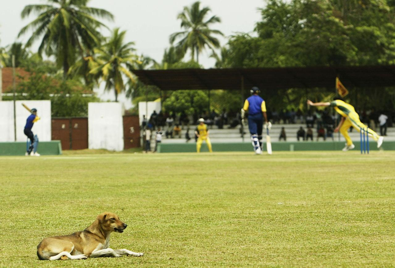 COLOMBO, SRI LANKA - FEBRUARY 17:  A dog takes a rest on the field as Jason Gillespie of Australia bowls during the practice match between Australia and the President's  XI played at Moratuwa Sports Club on February 17, 2004 in Colombo, Sri Lanka. (Photo by Hamish Blair/Getty Images)