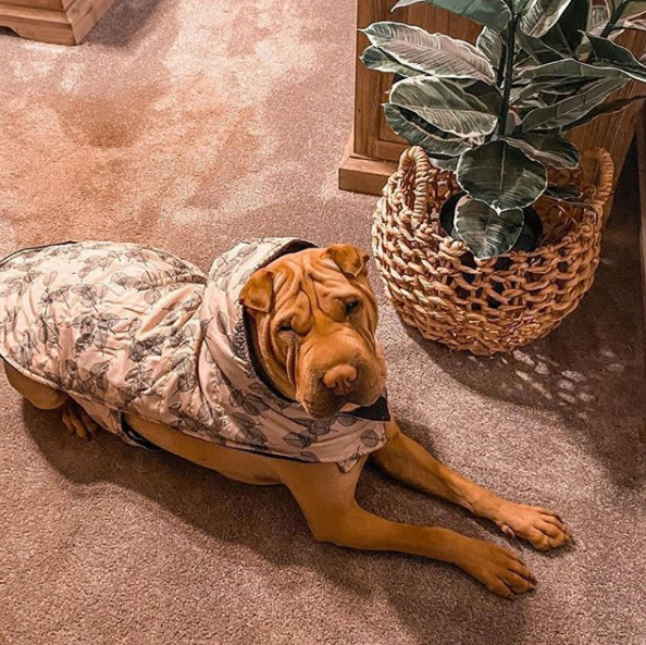 A four-legged fan sporting a coat from The Reject Shop. Photo: Instagram/@mila.and.koda.