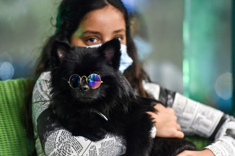 In changing Saudi Arabia, first dog cafe delights pet lovers