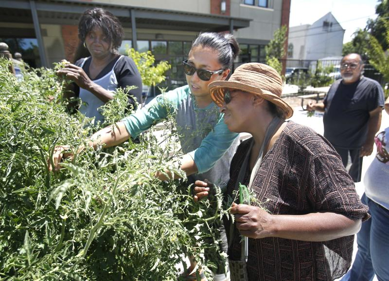 In this photo taken Tuesday, June 11, 2013 Greg Norrish, left, shows Laura Poree how to care for tomato plants during a home gardening seminar at the Sacramento Food Bank in Sacramento, Calif. Along with distributing food to low-income clients, the food bank provides seminars, soil, plants and tools for people to organically grow their own vegetables at home. Poree, who lives on her SSI income, switched to a vegan diet, and enrolled in the food banks twice weekly home gardening seminars.(AP Photo/Rich Pedroncelli)