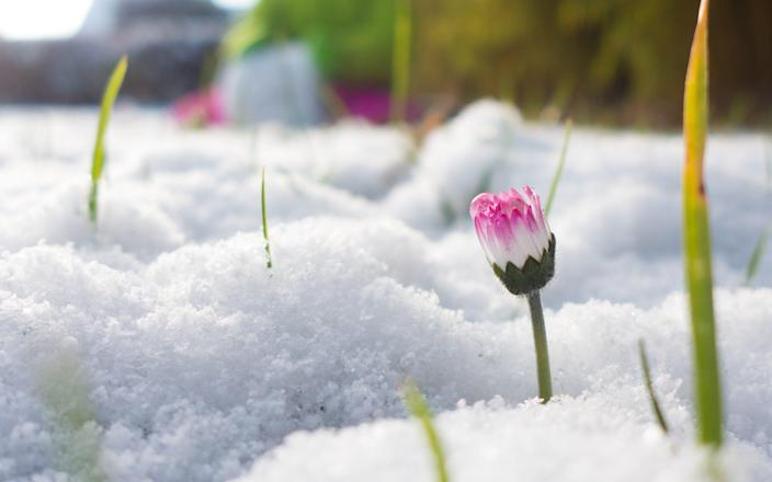These 10 minute garden jobs will revive snow-damaged plants - Getty Images