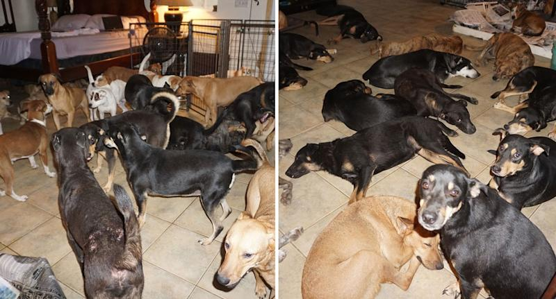 Dogs shown sleeping and others standing around inside woman's home during Bahamas Hurricane Dorian.