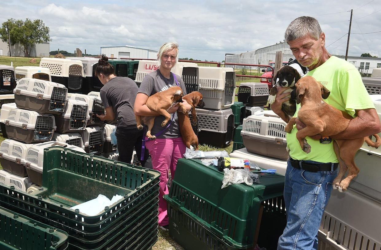 VolunteersBrooke Wagley and Peter Eynard prepare to place four puppies in a kennel for evacuation by the United States Humane Society.
