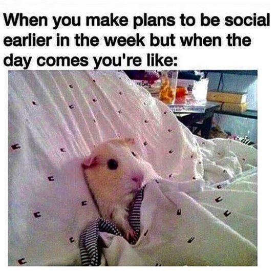 when you make plans to be social earlier in the week but when the day comes you're like *hamster lying in bed*