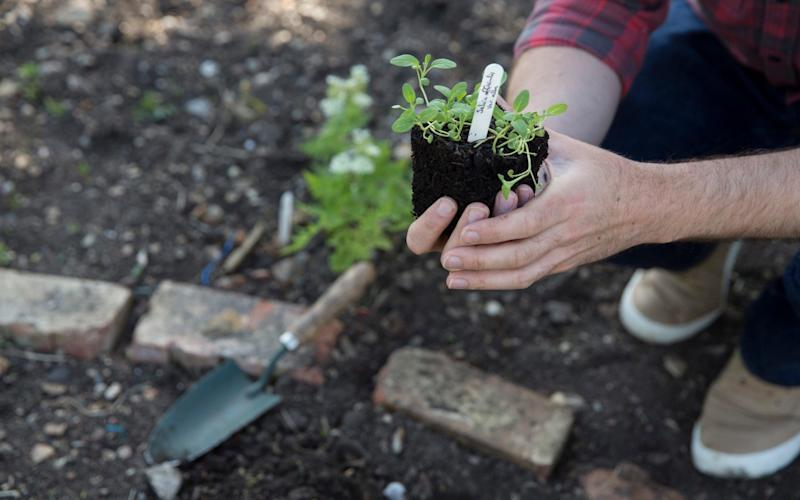 Despite alternatives being readily available for use as compost and bedding, British gardeners continue to buy endangered peat - Heathcliff O'Malley