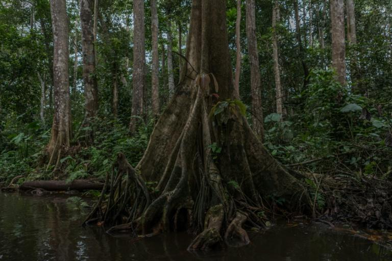 The freshwater swamp forest of Hlanzoun is one of the last of its kind in Benin and is at risk of disappearing