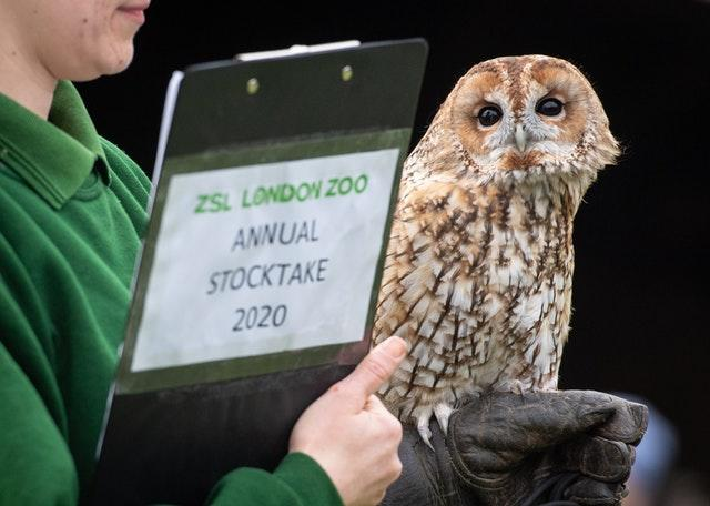 Owlberta the Tawny Owl peers round a zookeeper's clipboard