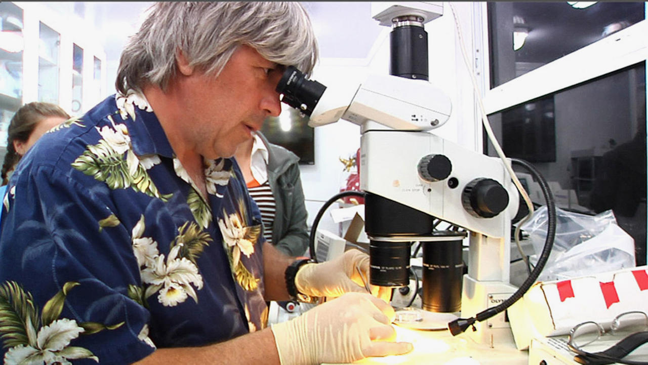 In this March 30, 2014, photo, University of Florida neurobiologist Leonid Moroz looks through a microscope to dissect nerve cells from a mysterious marine creature called a comb jelly, while on board a ship off the coast of Florida. Moroz is on a quest to decode the genomic blueprints of fragile marine life, like these comb jellies, in real time _ on board the ship where they were caught. (AP Photo/Suzette Laboy)