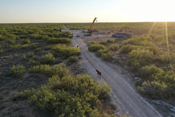 """In this June 2021 photo provided by rancher Ashley Williams Watt, cows stand in the roadway near the Estes 24 well on the Antina Cattle Co. ranch near Crane, Texas. An oil worker noticed salty brine bubbling up near the site in early June. It was later determined that the source was the Estes 24, a """"plugged and abandoned"""" well that was first plugged back in 1995. Buried under the sand, it became unplugged and started leaking the brine, a byproduct of oil production that is considered a toxic substance. (Ashley Williams Watt via AP)"""