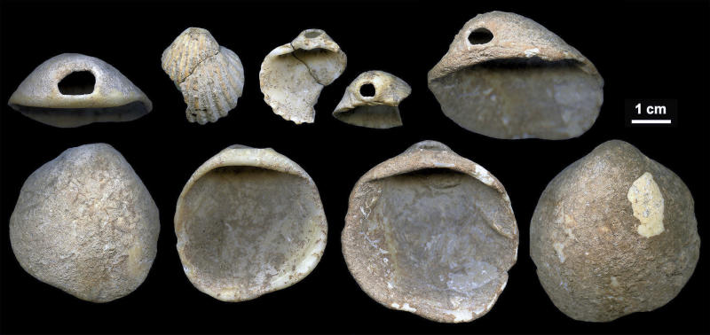 This undated image provided by João Zilhão in February 2018 shows perforated shells found in sediments in the Cueva de los Aviones near Cartagena, Spain. The artifacts date to between 115,000 and 120,000 years ago.New discoveries in some Spanish caves give the strongest evidence yet that Neanderthals created art. (João Zilhão via AP)