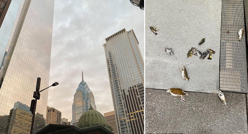 Left - the skyscrapers about Pennsylvania. Right - dead birds on the ground.