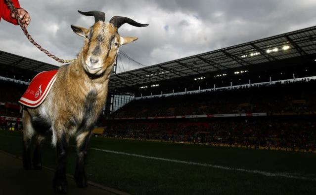 FILE PHOTO: Goat Hennes VIII, the mascot of FC Cologne waits for the start of the German first division Bundesliga soccer match against Werder Bremen in Cologne