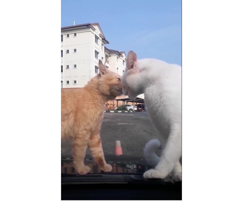 Screenshot of the video showing the cats trying to settle their score on a car before they were chased off with the swipe of a wiper.